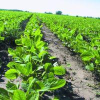 Por qué los cultivos transgénicos son una amenaza a los campesinos, la soberanía alimentaria, la salud y la biodiversidad en el planeta