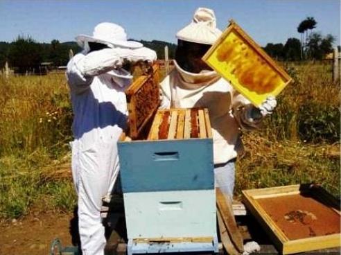 apicultura feliciano