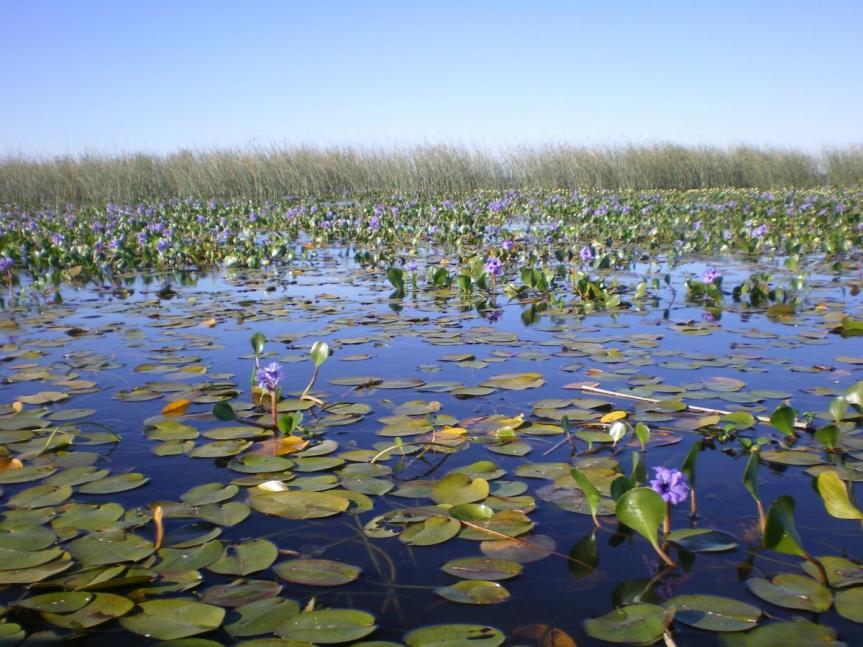 Presentarán en Paraná el Inventario de Humedales deArgentina