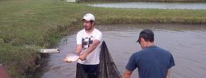 acuicultura corrientes peces