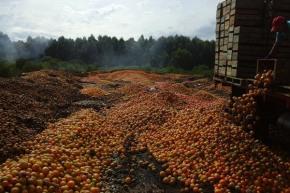naranjas tiradas bajos precios mercado