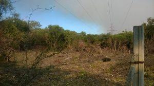 denuncian desmonte area natural protegida