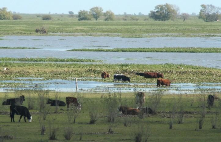 Delta Parana humedal