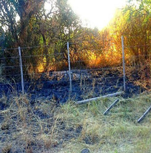 monte nativo quemado