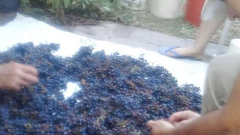 vino artesanal