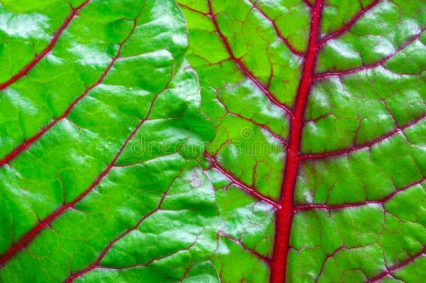 delirio germinal verde poema