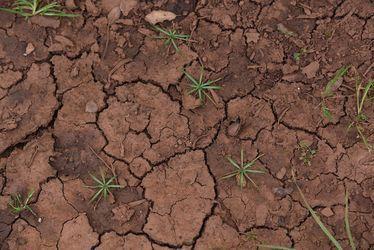 tierra-arcillosa-seca-y-compactada.