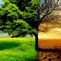 La rebeldía ambiental frente el cambio climático