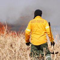 Las quemas ilegales en el Delta